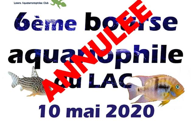 annonce-annulation-bourse-lac-2020